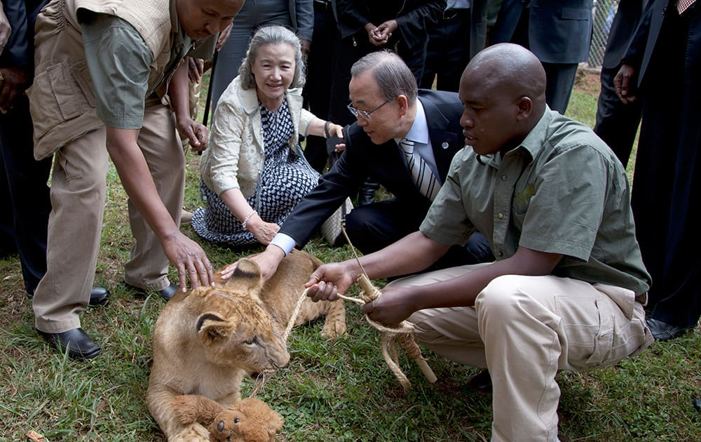 United Nations Secretary General Ban Ki-moon and his wife Ban Soon-Taek pet a lion cub which the Secretary General adopted giving the name Tumaini (Hope) during his visit to the Nairobi Orphanage in Nairobi, Kenya.