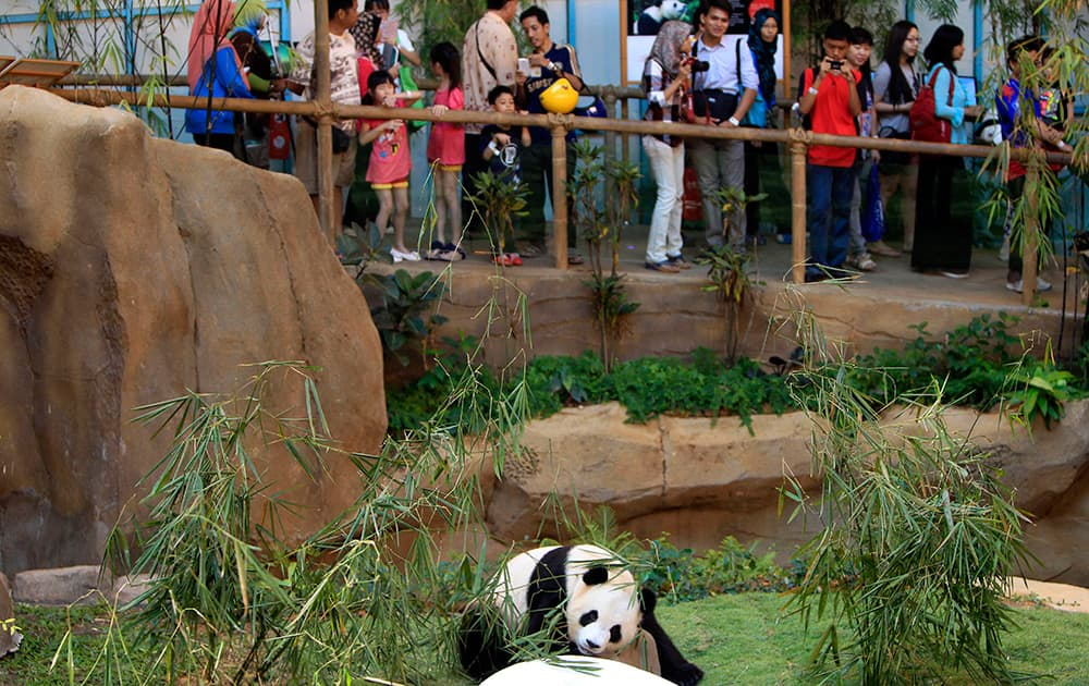 Visitors watch Xing Xing, formerly known as Fu Wa, one of two giant pandas from China, at the Giant Panda Conservation Center at the National Zoo in Kuala Lumpur, Malaysia.