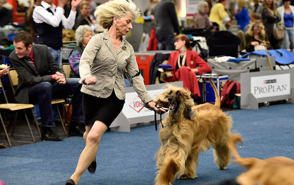 An Afghan greyhound performs with its owner at the dog show in Dortmund, Germany.