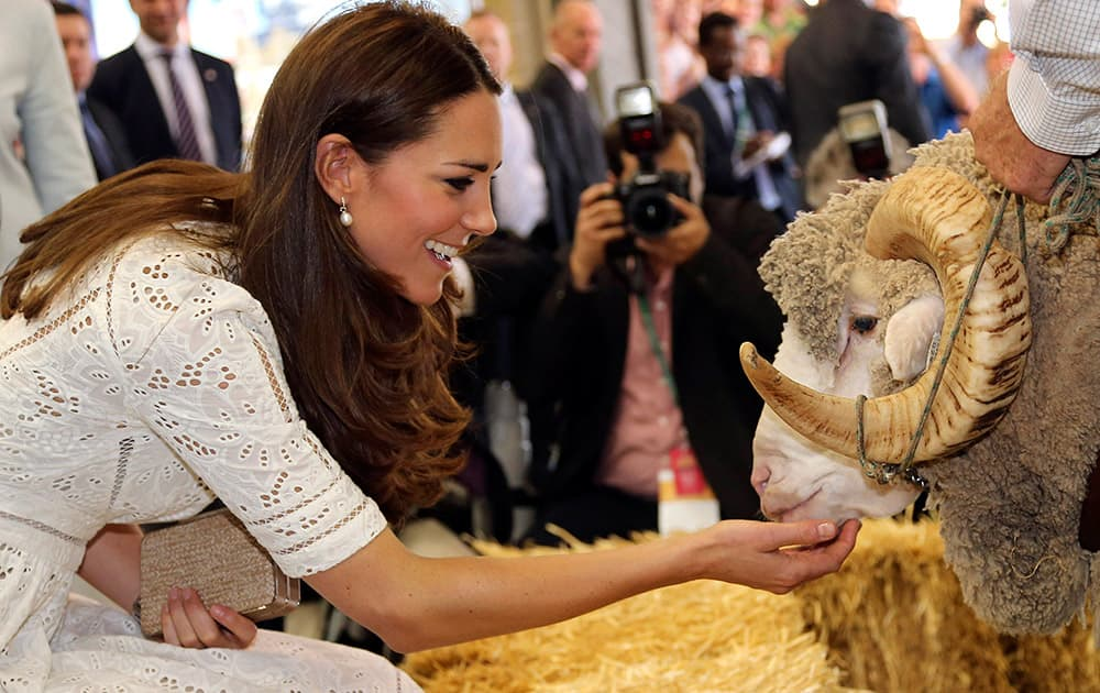 Britain`s Kate, Duchess of Cambridge, pats Fred the Merino Ram during a visit to the Royal Easter Show in Sydney, Australia.