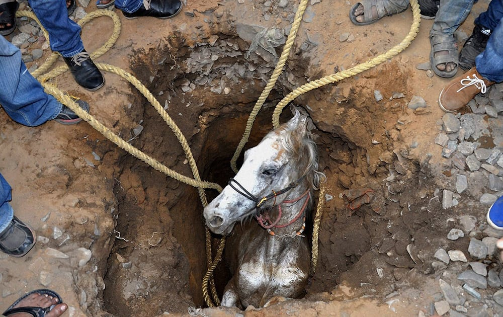 People stand around a pit to rescue a horse that fell in, in Jalandhar.