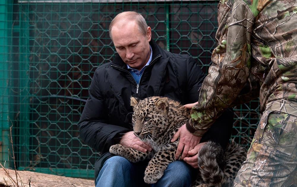 Russian President Vladimir Putin pets a snow leopard cub at the snow leopard sanctuary in the Russian Black Sea resort of Sochi.