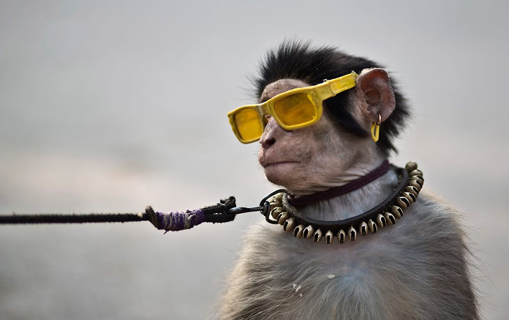 An eight-months-old trained monkey sits on a can next to his owner, holding the leash as they wait for customers to perform to in a park in Islamabad, Pakistan.