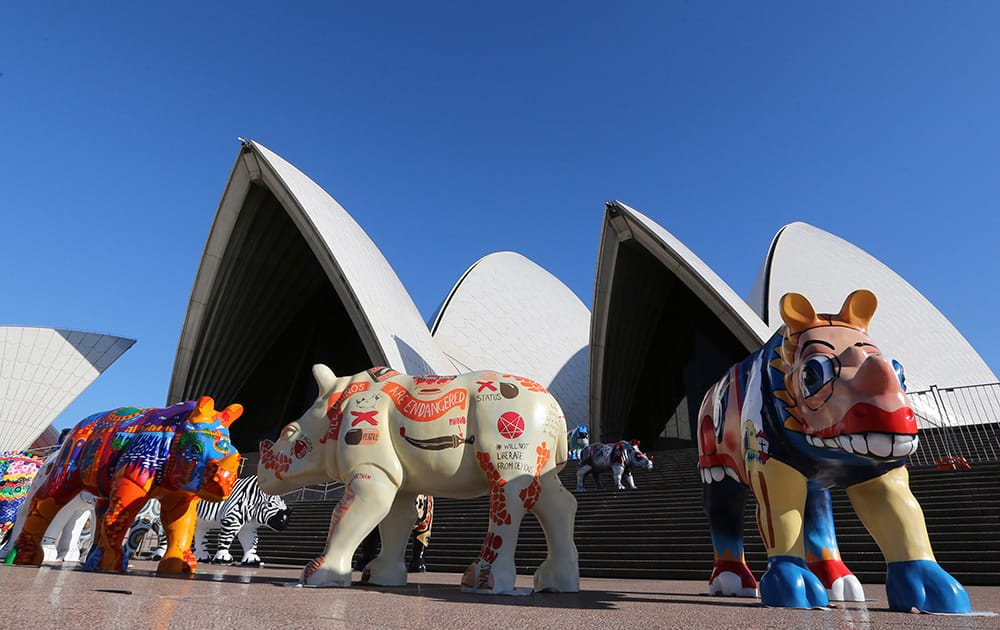 Colorful sculptures of black rhinos stand in front of the Opera House in Sydney, Australia.