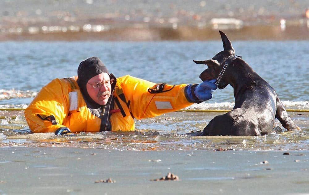St. Louis firefighter Stan Baynes, from Rescue Squad 1C, keeps a Poberman Pinscher named Diablo above water while he is rescued from the lake in O`Fallon Park in St. Louis.