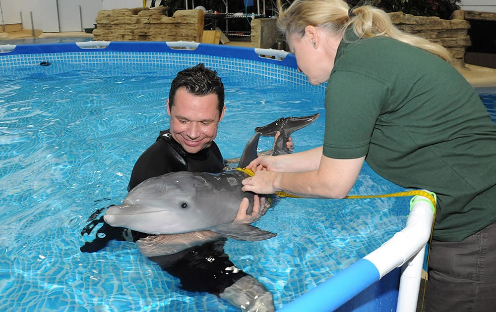 This photo provided by the Chicago Zoological Society, Mark Gonka, lead trainer for the Chicago Zoological Society, assists marine mammal curator Rita Stacey as she measures the girth of a 6-week-old bottlenose dolphin at the Brookfield Zoo in Brookfield, Ill.