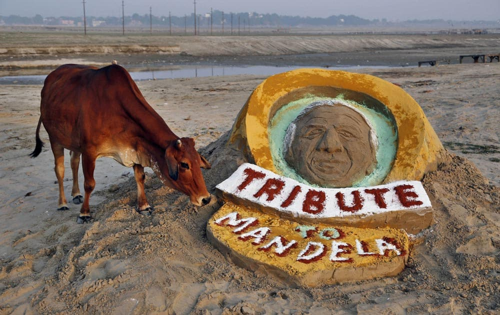 A cow stands near a sand sculpture of Nelson Mandela made by few Indian students at Sangam, the confluence of the Rivers Ganges, Yamuna, and the mythical Saraswati, in Allahabad.