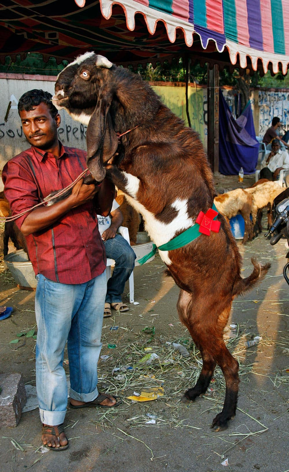 A man displays his goat at a marketplace ahead of the Muslim festival of Eid al-Adha in Hyderabad.
