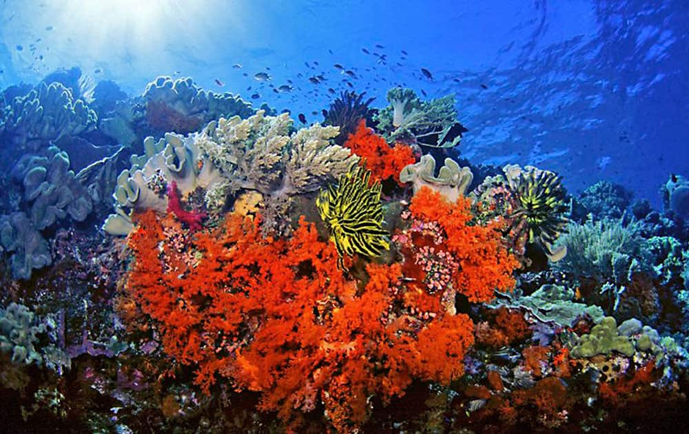 This undated handout photo provided by Marinelifephotography.com shows Soft corals, crinoids and associated reef fishes in Southeast Sulawesi, Indonesia.