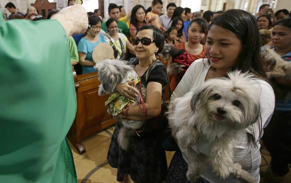 Roman Catholic devotees queue up to have their pets blessed by a Catholic priest following a mass in celebration of the feast day of Saint Francis of Assisi, in Manila.