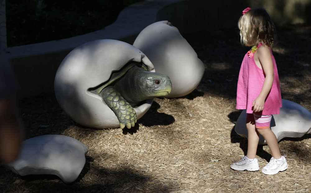 Brooklynn Wirth, 4, looks at a giant turtle shell display at the Rory Meyers Children`s Adventure Garden at the Dallas Arboretum, in Dallas.