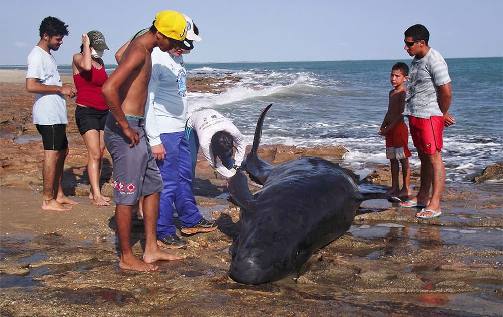 In this photo released by the Voz de Areia Branca, a community news blog, people look on as biologists inspect a dolphin on Upanema beach in the Areia Branca municipality of Rio Grande do Norte State, Brazil.