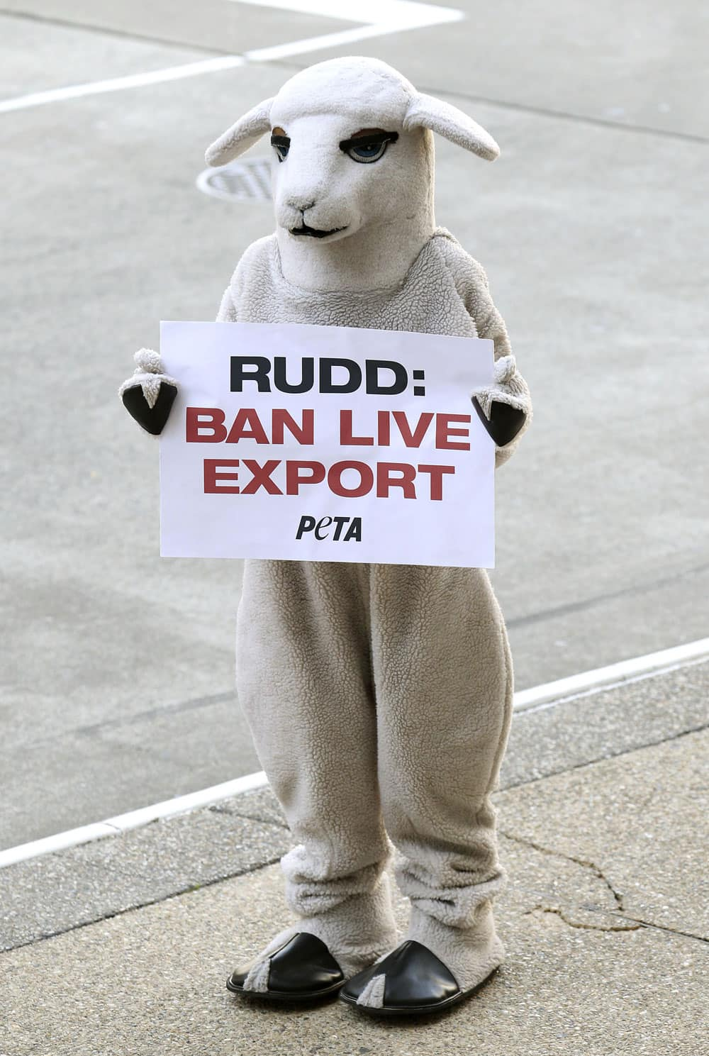 A member of PETA, People for the Ethical Treatment of Animals, protests outside the Brisbane Convention Centre during the Australian Labor Party`s campaign launch in Brisbane, Australia.