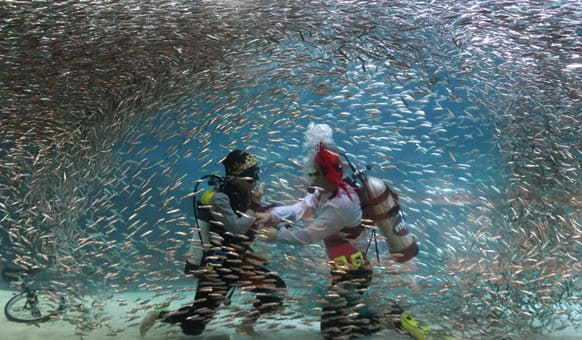 Dvers perform with sardines as part of summer vacation events at an Coex Aquarium in Seoul, South Korea.
