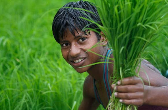An Indian farmer boy sows paddy saplings as it rains in a field in Uruwa village, about 50 kilometers (44 miles) South of Allahabad.