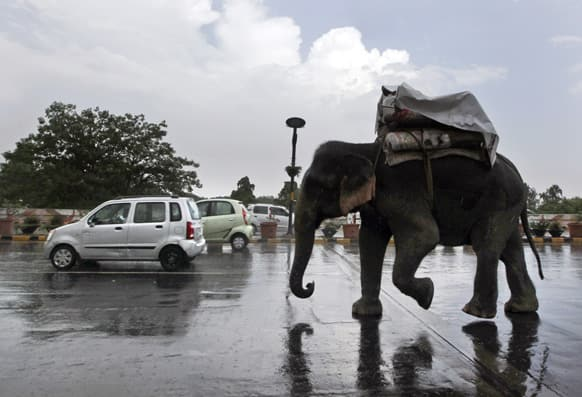 People cover themselves with a plastic sheet as they ride an elephant in the rain on a street in New Delhi.