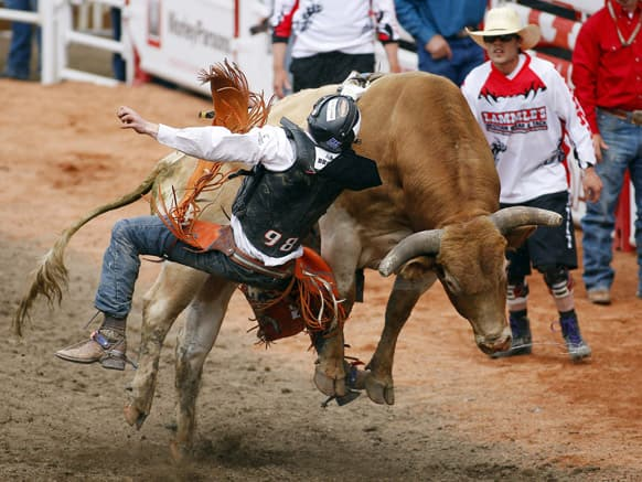 Tanner Byrne, from Prince Albert, Saskatchewan, comes off Cajun Shaker during bull riding at the Calgary Stampede in Calgary, Alberta.