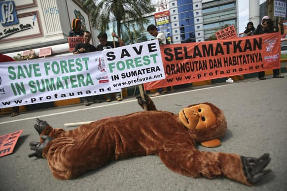 An Indonesian activist in an orangutan costume performs a die-in as he holds a banner during a protest calling for protection of orangutan habitats on Sumatra island, in Medan, North Sumatra, Indonesia.