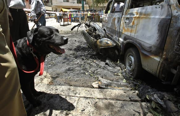 Police use a sniffer dog to collect evidence next to charred vehicles at the site of an explosion in a residential neighborhood near the office of Bharatiya Janata Party (BJP), in Bangalore.