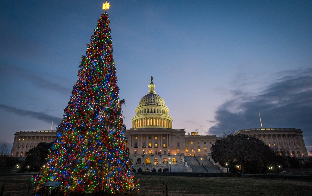 The US Capitol Christmas tree is lit against the early morning sky in Washington.
