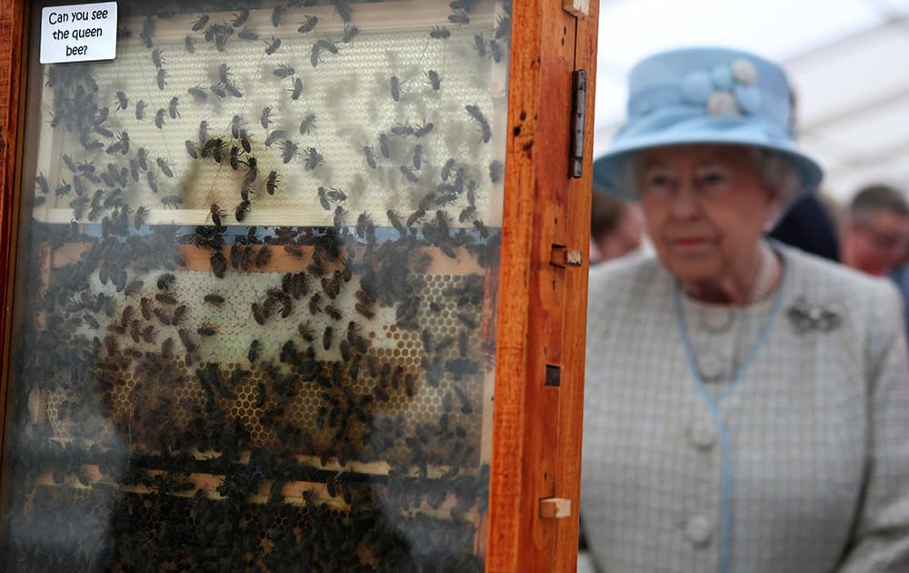Britain`s Queen Elizabeth II looks at a display of bees from the Aberdeen Bee Keepers Association`s with a sign reading `Can you see the queen bee?`, during her visit to the 150th Anniversary Turriff Show in Turriff, Scotland.