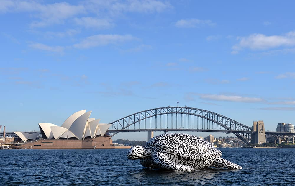 A huge floating Sea Turtle sculpture drifts past the Opera House and Harbour Bridge in Sydney, Australia.