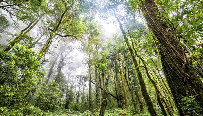 NASA to map earth forests in 3D