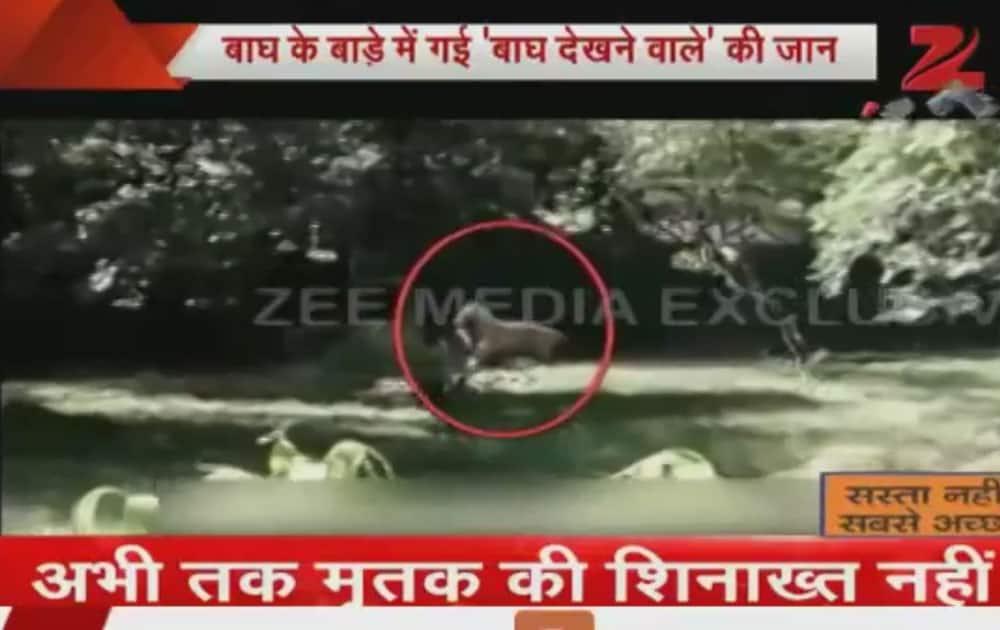 White tiger kills boy at Delhi zoo
