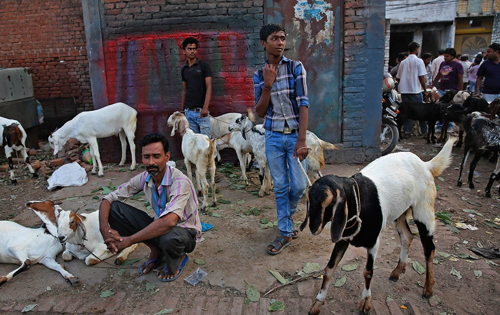 Vendors await customers at a live-stock ahead of Eid-al-Adha festival in Allahabad.