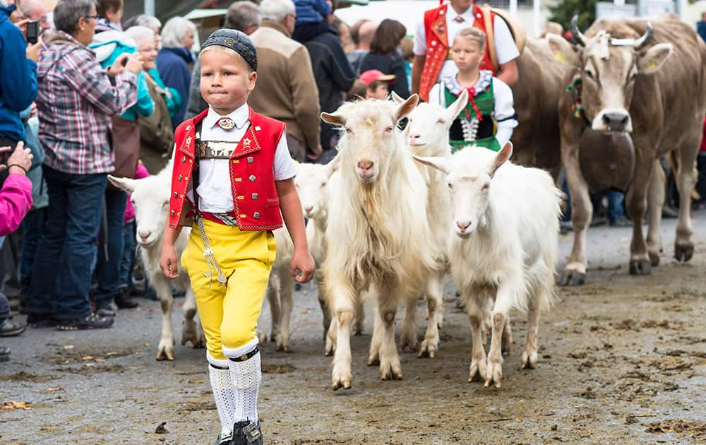 A boy in traditional clothes walks ahead of goats at the traditional cattle market in Appenzell, eastern Switzerland.
