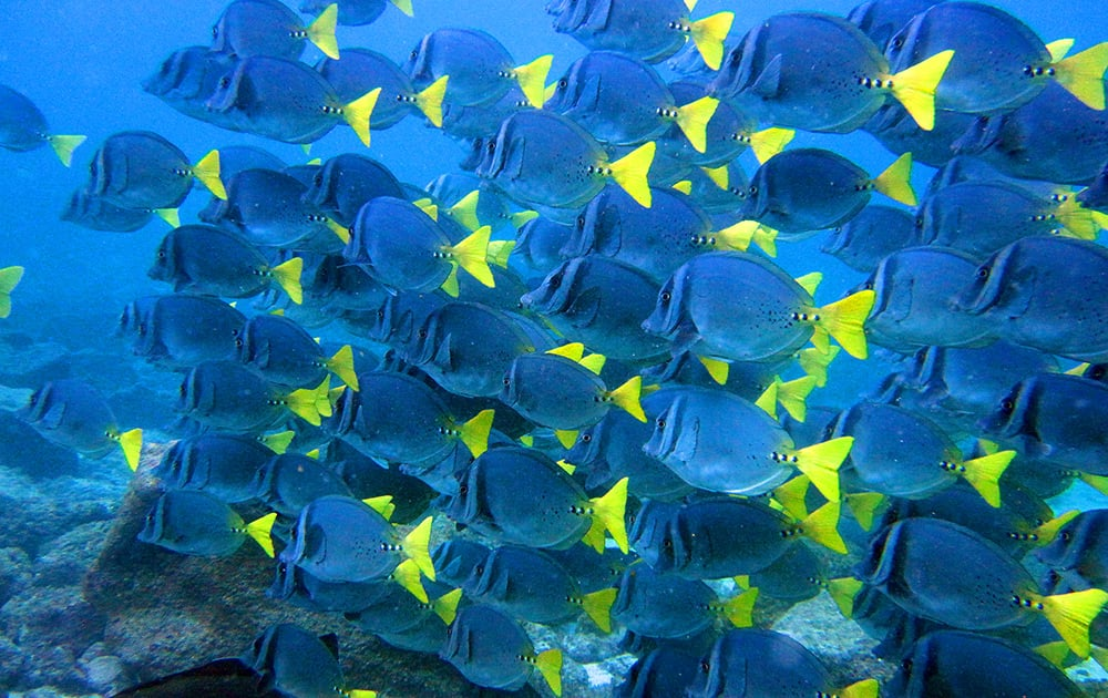 The island is also known for its colourful fish and and is a good place to go diving.