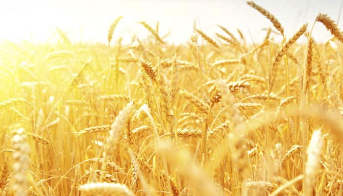 New gene variants can enhance crop production by 100 percent