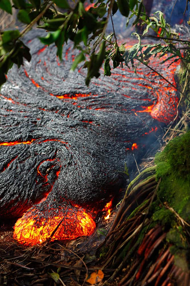 This photo taken and released by the US Geological Survey shows a `toe` of Pahoehoe lava oozing out of the edge of the main flow, about 328 yards upslope of the leading edge of the flow, near the town of Pahoa, Hawaii.