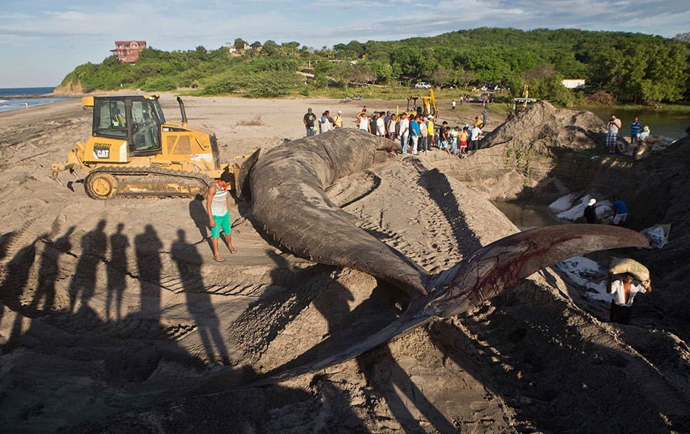 Residents and tourists watch as workers prepare a grave for the burial of a whale carcass on Popoyo beach, in Tola, Nicaragua.