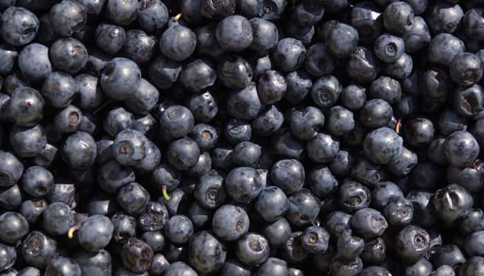 Know Why Blueberries Are Good To Eat Healthy Eating News Zee News