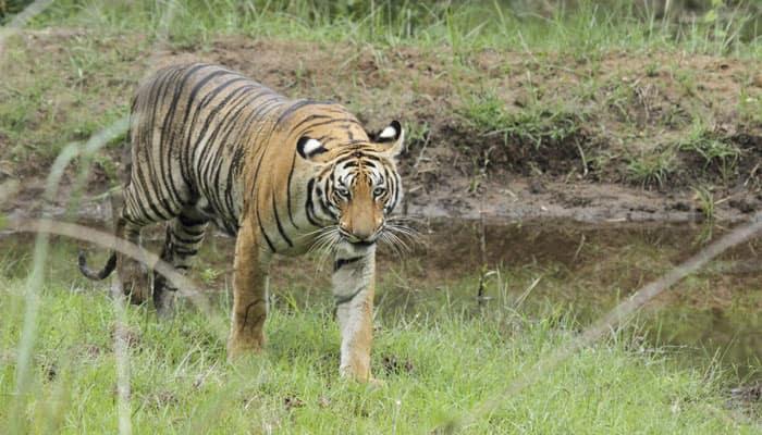 NTCA approves tiger reserve in Chhattisgarh