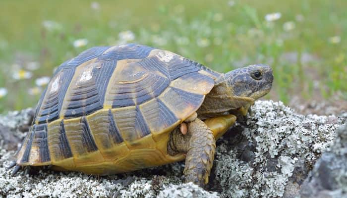 New 'Tree of life' puts turtles next to dinosaurs