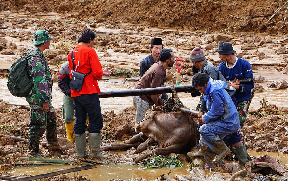 Rescuers help to evacuate a cow after a village was swept away by landslides in Jemblung, Central Java, Indonesia.