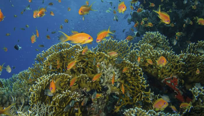 Coral-eating fish that camouflages its odour