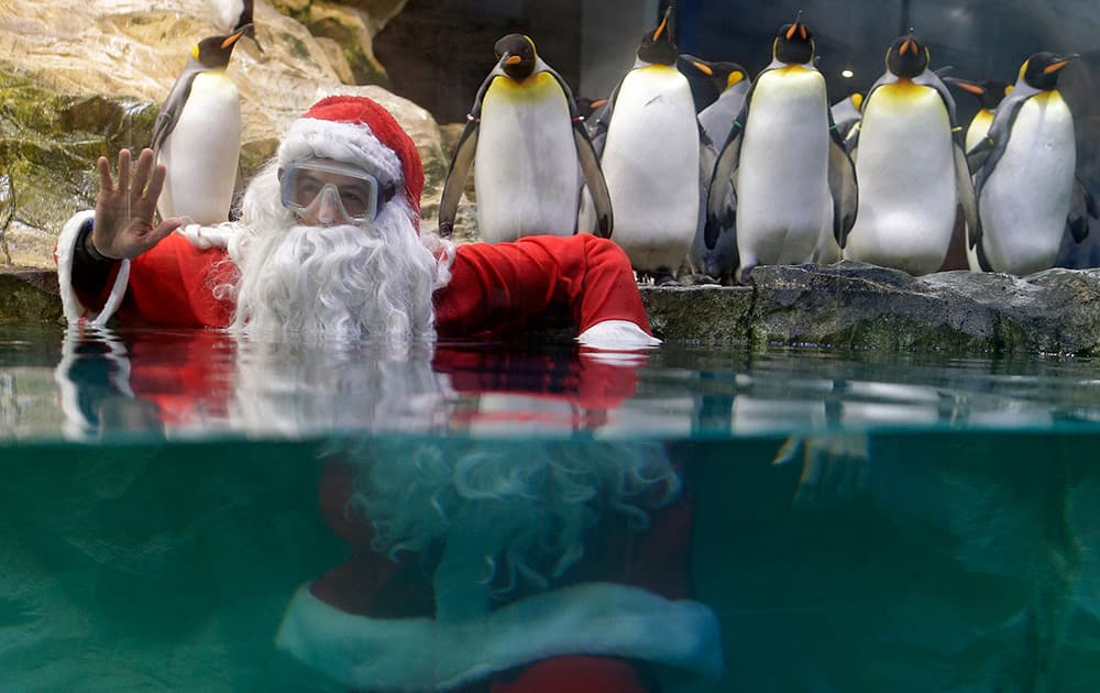 A man dressed as Santa Claus poses for photographers with king penguins at the Marineland animal exhibition park in Antibes, southeastern France.