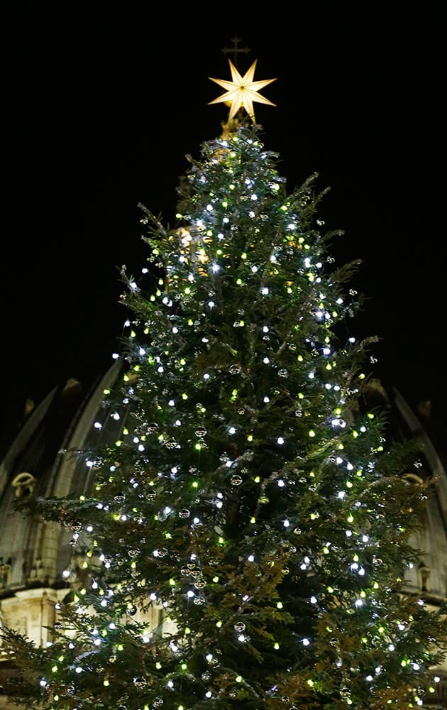 The 25.5 meters (83.66 ft), 70-year old Christmas tree is lit in St. Peter's square at the Vatican.