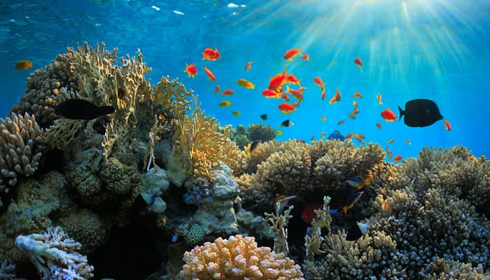 Scientists predict worst 'coral bleaching' in 20 years