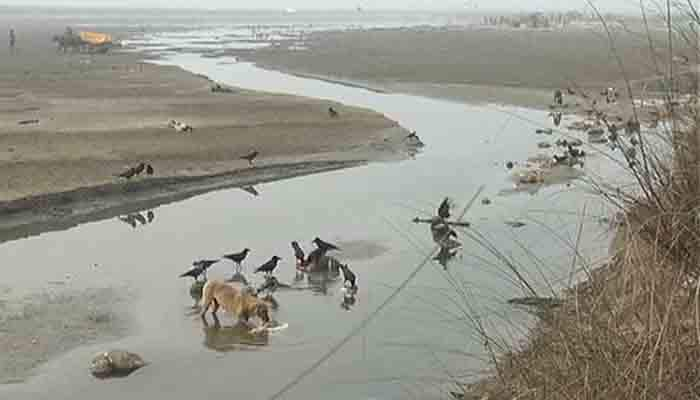 Scores of dead bodies found floating in Ganga river in Unnao, UP   Uttar Pradesh News   Zee News