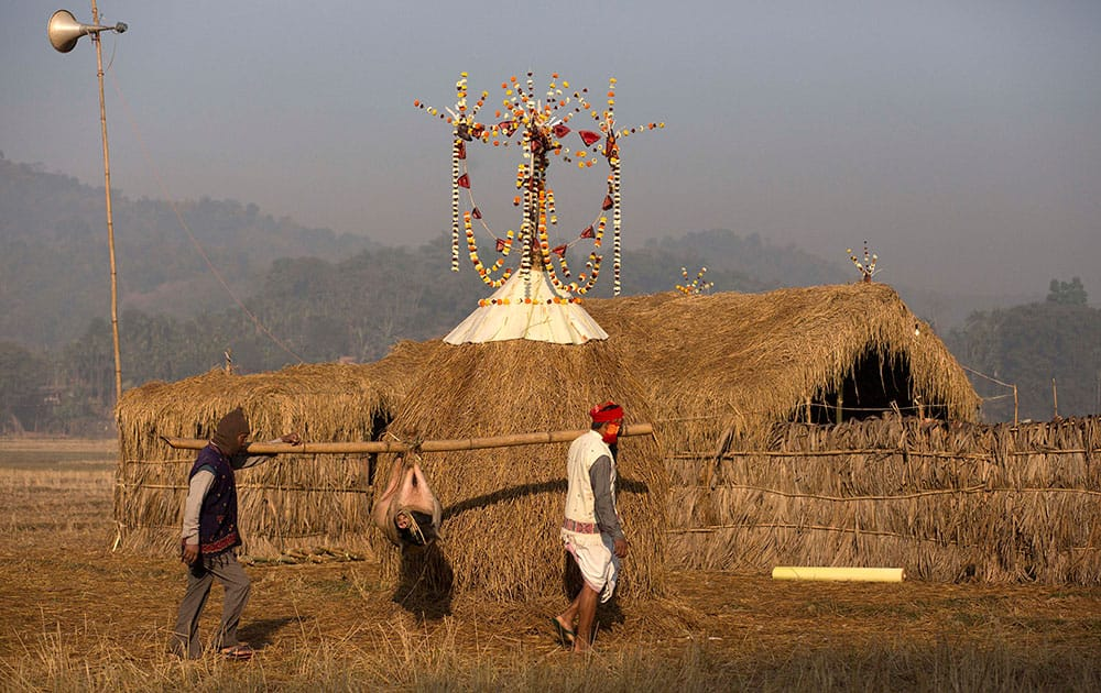 tribal Karbi villagers carry a pig to a makeshift Bhelaghar, or a thatched house, for Uruka feast as part of the Bhogali Bihu celebrations at the Goroimari Lake in Panbari village, some 50 kilometers (31 miles) east of Gauhati, India.
