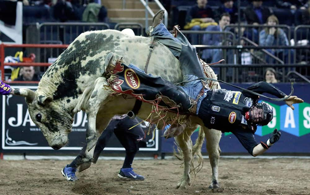 Chase Outlaw, of Hamburg, Ariz., dismounts Sun Dome during the Professional Bull Riders Buck Off, in New York's Madison Square Garden.
