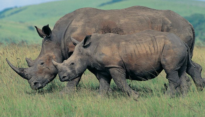 Rhino census in north West Bengal begins today