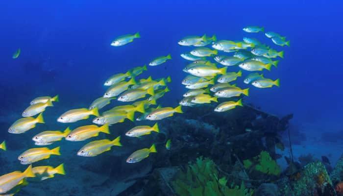 Fish found living beneath Antarctica