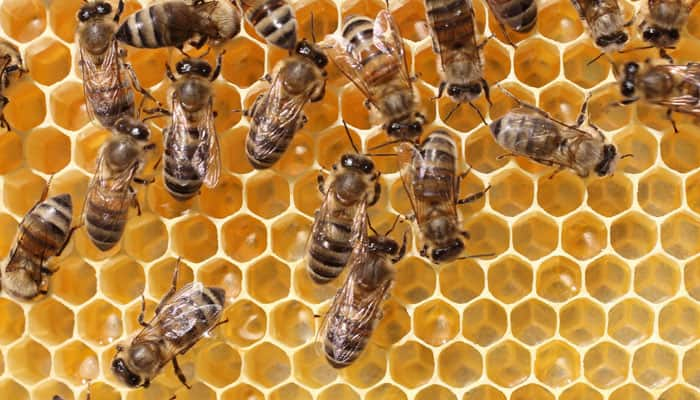 Dwindling bee population poses malnutrition risk