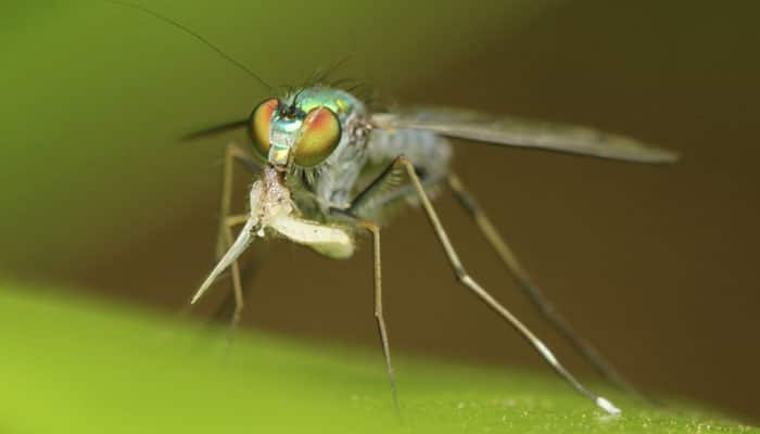 Fruit flies can smell antioxidants in their food