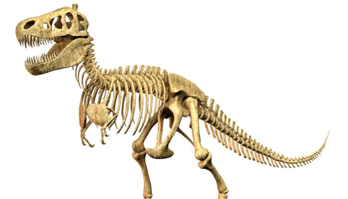 Long-necked dinosaur discovered in China